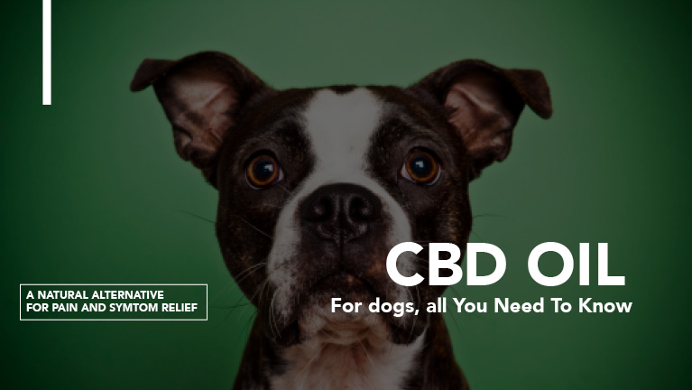 picture of dog with CBD oil