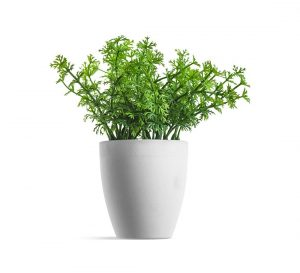 slider revolution plant in white pot